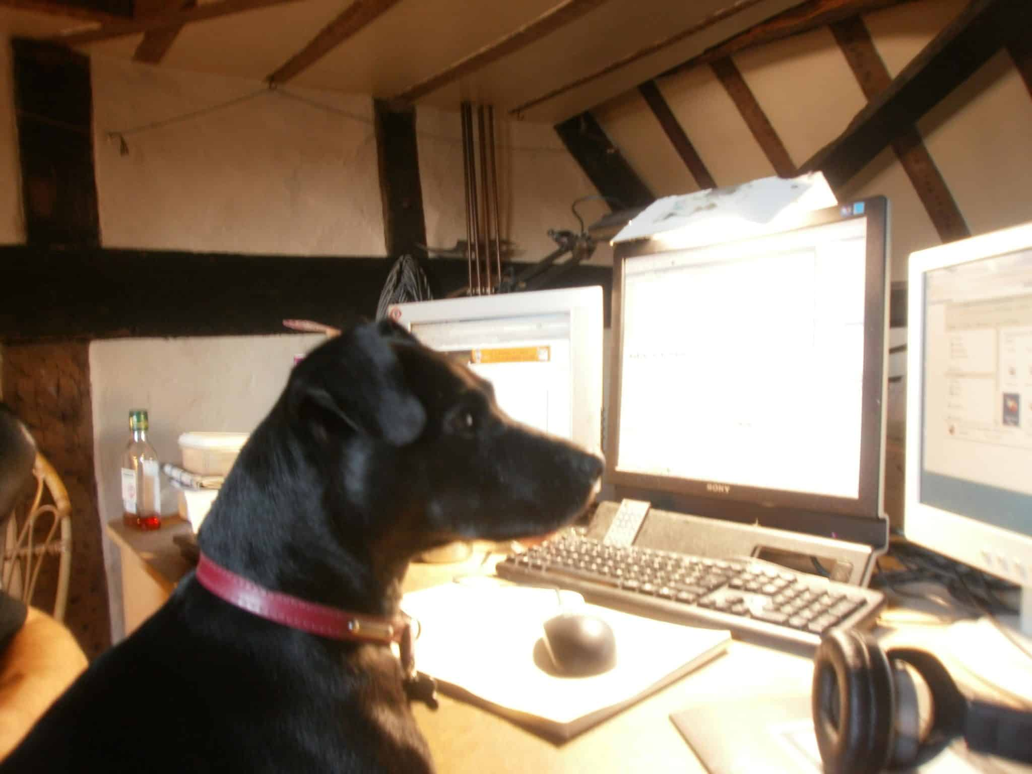 Picture of a dog online managing its business social media accounts.